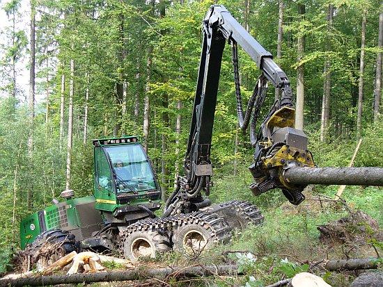 | Bildquelle: Forstamt Bad Salzungen