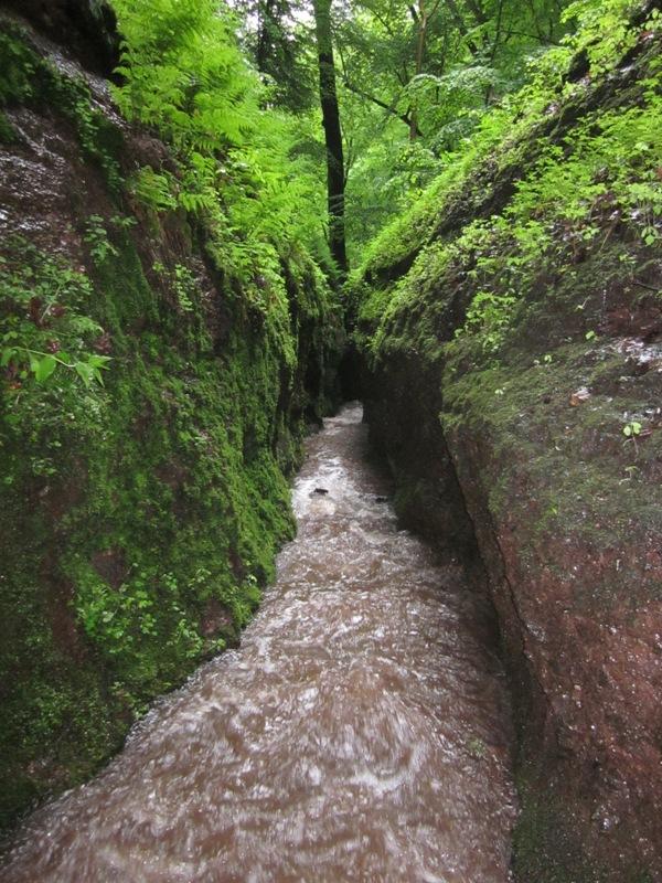 | Bildquelle: Thüringer Forstamt Marksuhl