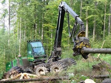   Bildquelle: Forstamt Bad Salzungen