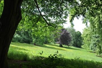 Gefährliche Bäume im Stadtpark und am Eichrodter Weg werden beseitigt