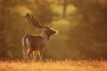 Kabinett beschließt Änderungsentwurf des Jagdgesetzes