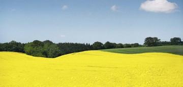 3.058 landwirtschaftliche Grundstücke wurden 2018 in Thüringen verkauft