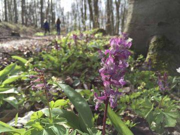 Schadholzeinschlag in Thüringen um knapp die Hälfte zurückgegangen