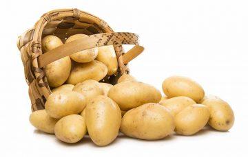 Geringe Kartoffelernte in Thüringen