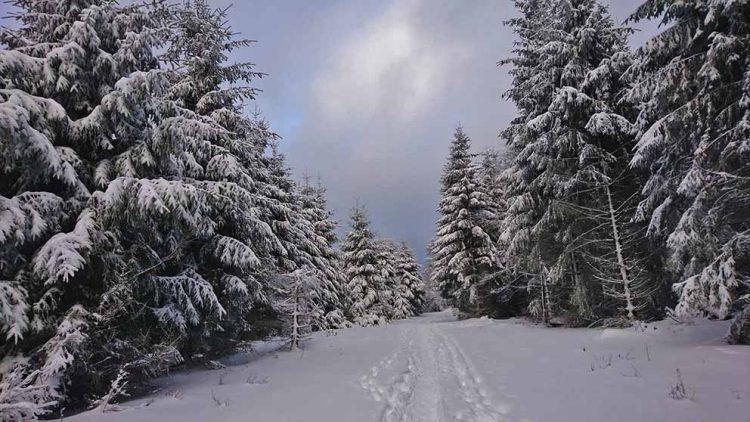 Dreiherrenstein Ruhla - Die Radiomacher freuen sich auf ein stimmungsvolles Weihnachtsfest und haben gemeinsam ein märchenhaftes und musikalisches Programm gestaltet. | Bildquelle: © Franziska Klemm / Wartburg-Radio 96,5