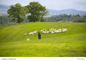 Wegen Trockenheit: Freigabe von ÖVF-Brachen für Futternutzung