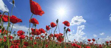 Symbolbild | Bildquelle: © Calin Tatu - Fotolia.com