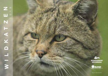 Titelbild Wildkatzenkalender 2019 | Bildquelle: Dr. Katrin Krischke / Wildtierland Hainich gemeinnützige GmbH