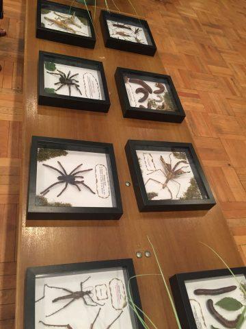 | Bildquelle: Bei der Reptilienausstellung konnte man viele verschiedene Präparate und Tiere sehen.