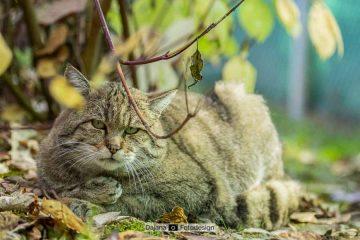Katzennächte: Vollmondwanderung im Wildkatzendorf