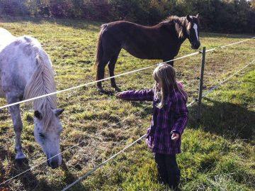 Tierquälerei: Pferd wurde schwer verletzt