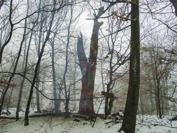 Löscheinsatz im Wald