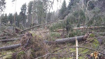 Neuer Wald entsteht im Stadtwald beim Ortsteil Göringen