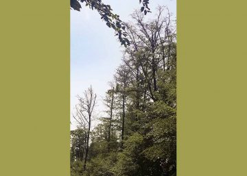 Wald hat ein Gedächtnis