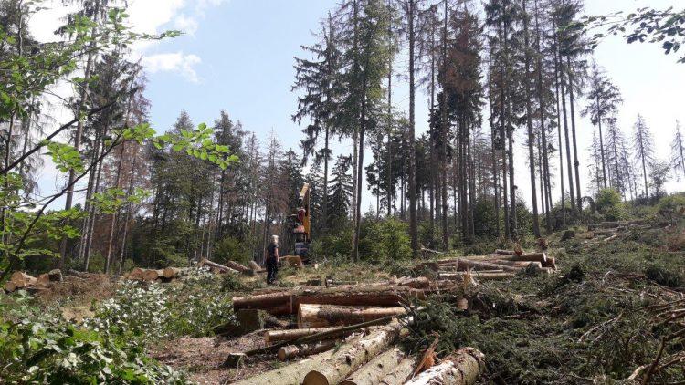 Bildquelle: ThüringenForst  Forstmaschine erntet vom Käfer befallene Fichten im Revier Etterwinden