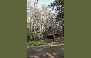 Bildquelle: © Thüringer Forstamt Marksuhl Abgestorbene Buchen an der Weinstraße (Schutzhütte am Aufstieg zum Drachenstein)