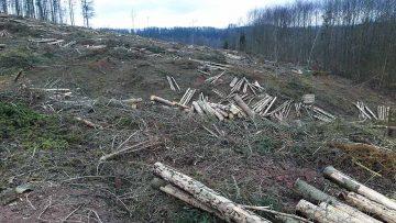 """Bildquelle: © Thüringer Forstamt Marksuhl Durch Borkenkäfer zerstörter Fichtenbestand im Revier Wartburg, Forstort """"Diebeskammer"""""""